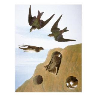 Audubon: Swallows Postcard