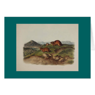 Audubon - Tawny Lemming & Black's Lemming Card