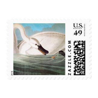 Audubon: Trumpeter Swan Postage