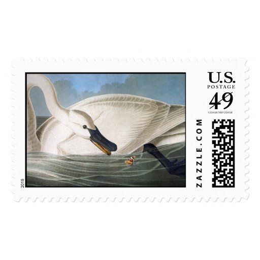 Audubon Trumpeter Swan Postage Stamp