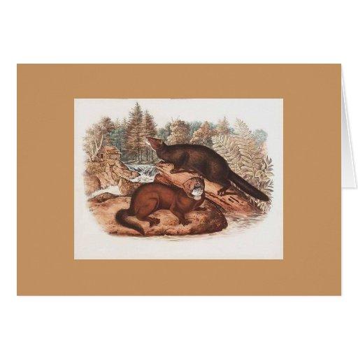 Audubon - visión felicitación