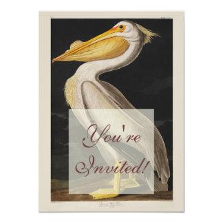 Audubon White Pelican Bird Vintage Print Card