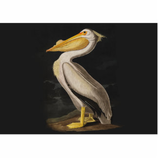 Audubon White Pelican Bird Vintage Print Cutout