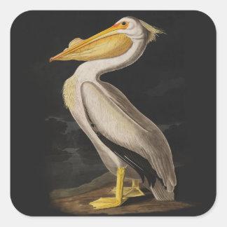 Audubon White Pelican Bird Vintage Print Square Sticker
