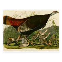 Audubon Wild Turkey Vintage Birds of America Postcard