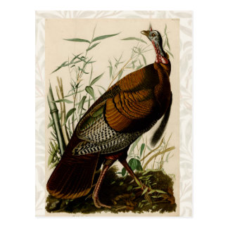 Audubon Wild Turkey Vintage Birds of America Post Cards