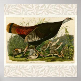 Audubon Wild Turkey Vintage Birds of America Print
