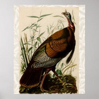 Audubon Wild Turkey Vintage Birds of America Posters