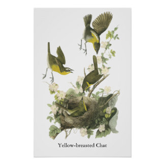 Audubon Yellow-breasted Chat Poster