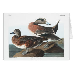 Greeting Card with Audubon's American Wigeon design