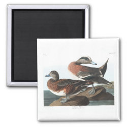 Square Magnet with Audubon's American Wigeon design