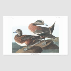 Rectangle Sticker with Audubon's American Wigeon design
