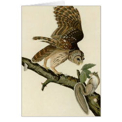 Note Card with Audubon's Barred Owl design