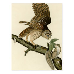 Audubon's Barred Owl Postcard