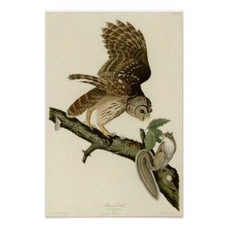 Matte Poster with Audubon's Barred Owl design