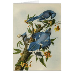 Note Card with Audubon's Blue Jays design