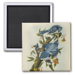 Square Magnet with Audubon's Blue Jays design