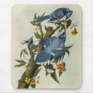 Audubon's Blue Jays Mouse Pad