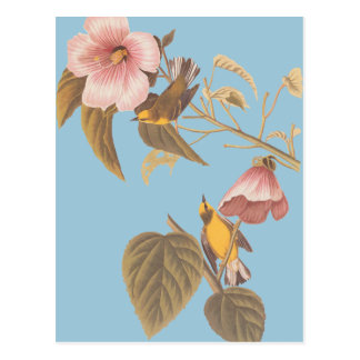 Audubon's Blue-Winged Yellow Warbler Song Birds Postcard
