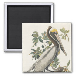 Square Magnet with Audubon's Brown Pelican design