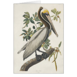 Note Card with Audubon's Brown Pelican design