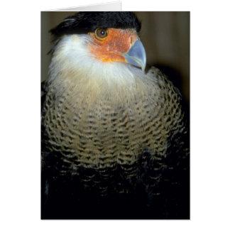 Audubon's Caracara Greeting Card