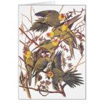Audubon's Carolina Parakeet Card