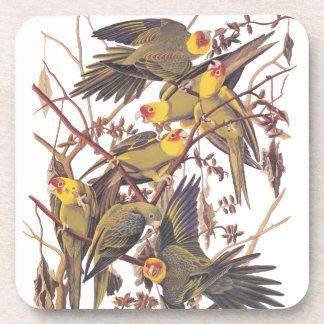 Audubon's Carolina Parakeet Coaster
