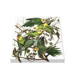 Audubon's Carolina Parakeet Gallery Wrap Canvas