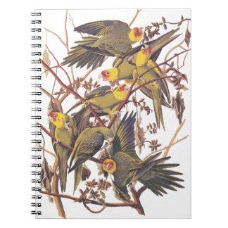 Audubon's Carolina Parakeet Notebook