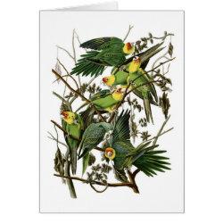 Note Card with Audubon's Carolina Parakeet design