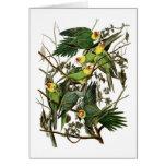 Audubon's Carolina Parakeets Greeting Card