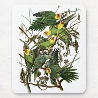 Audubon's Carolina Parakeets Mouse Pad