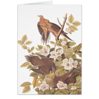 Audubon's Carolina Turtle Dove Card