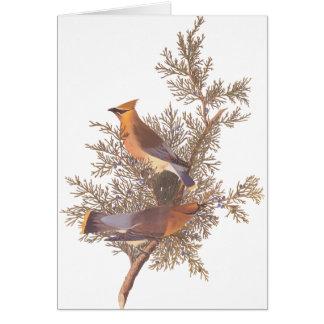 Audubon's Cedar Waxwing Bird Pair on Evergreen Card