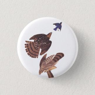 Audubon's Coopers Hawk Bird of Prey Pinback Button