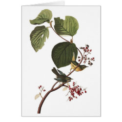 Note Card with Audubon's