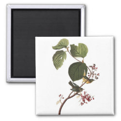 Square Magnet with Audubon's