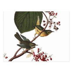 Postcard with Audubon's