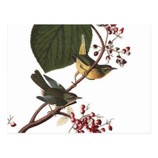 Audubon's Extra Warbler Postcard