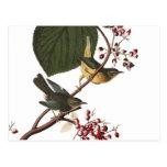 Audubon's Extra Warbler Postcards