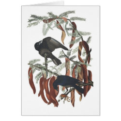 Note Card with Audubon's Fish Crow design