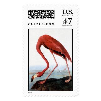 Audubon's Flamingo Postage Stamp