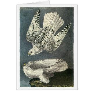 Audubon's Gyrfalcon Card