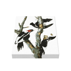 Premium Wrapped Canvas with Audubon's Ivory-billed Woodpecker design