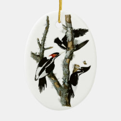 Oval Ornament with Audubon's Ivory-billed Woodpecker design