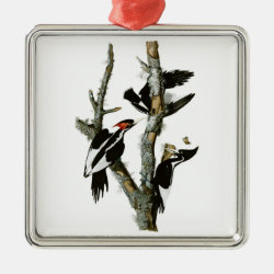 Premium Square Ornament with Audubon's Ivory-billed Woodpecker design