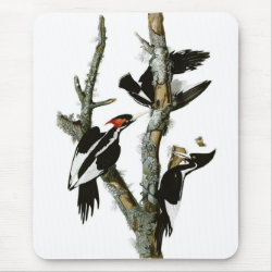 Mousepad with Audubon's Ivory-billed Woodpecker design