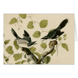 Greeting Card with Audubon's Loggerhead Shrike design