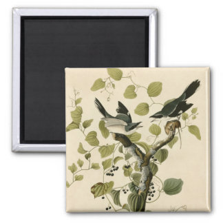 Audubon's Loggerhead Shrike 2 Inch Square Magnet